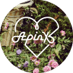 APINK+