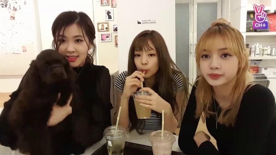 [CH+ mini replay] 강사블 BLACKPINK Loves Dogs