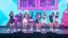 TT - TWICE SHOWCASE #4 SIGNAL
