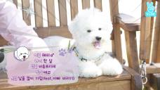 아이원츄 3회 <츄와 비숑강아지의 한강 나들이>