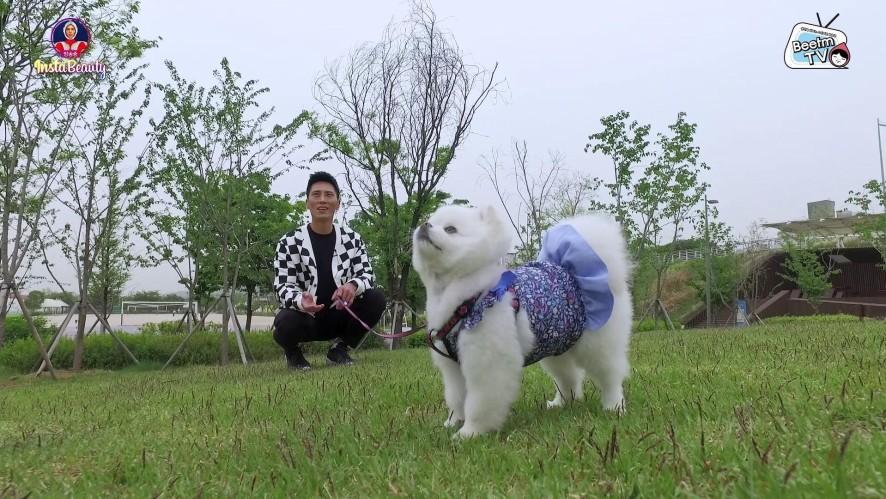 E11. #개스타그램의 최고봉! 그녀가 왔다! 인형보다 더 이쁜 강아지! 망고