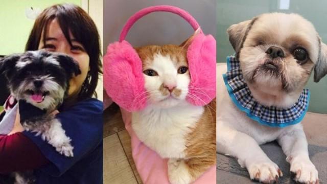 박정윤 수의사의 동물 가족들을 소개합니다! Introduction of Animal Family!