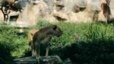 [일급비밀] 아인스크림 AIN'S CREAM : #9 동물원가다!!
