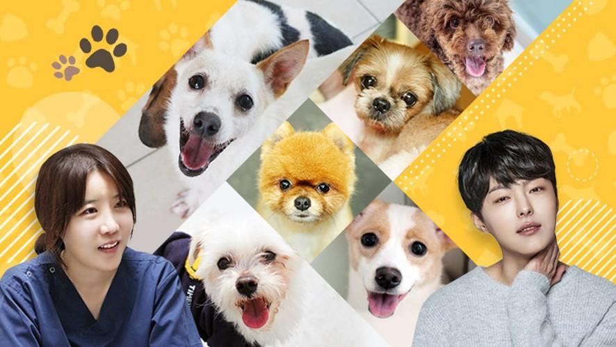 박시환X박정윤 수의사의 유기견 봉사활동 하는 날! Animal shelter volunteer day!