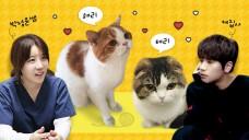 케이윌과 배워보는 고양이 마사지+해리&테리의 건강검진 Cat massage&health checkup w/박정윤수의사