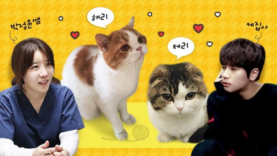 케이윌과 배워보는 고양이 마사지 + 해리&테리의 건강검진 w/ 박정윤수의사 Cat massage & health checkup
