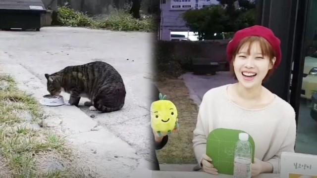 [해피빈펀딩] 배다해와 알아보는 길고양이와 함께 살아가는 법 #BaeDaHae #HappyBean #Cat