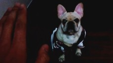 [VIXX] 떡잎부터 스타견 덩이와 덩부심 넘치는 식이🐶💕 (So cute RAVI's puppy)